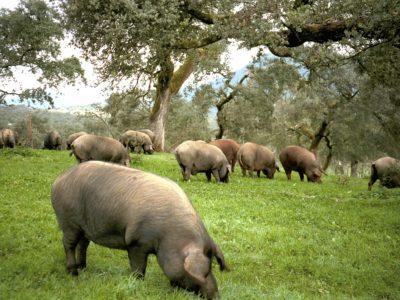 grisefarm besøk