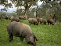 pig-farm-visit-arancena