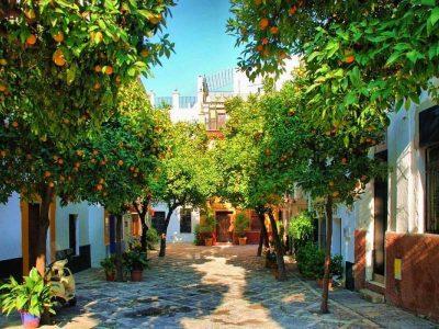 orange trees with oranges in Santa Cruz