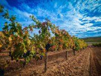 private-food-wine-tour-ribera-duero-18
