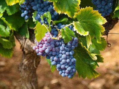private-food-wine-tour-ribera-duero-28