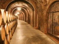private-food-wine-tour-ribera-duero-6